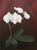 White orchid with back-lighting