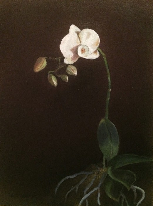 White orchid with several buds