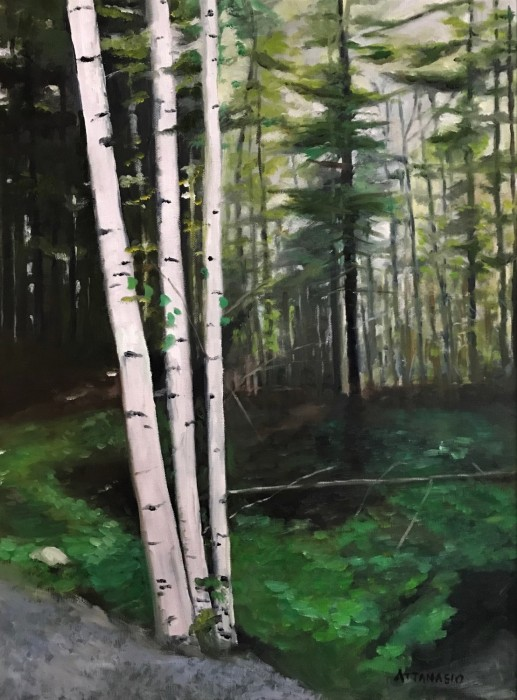 birch trees and forest
