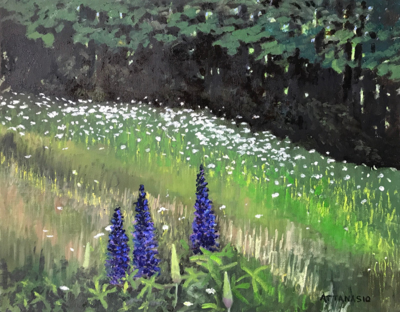 Lupines in a field with daisies